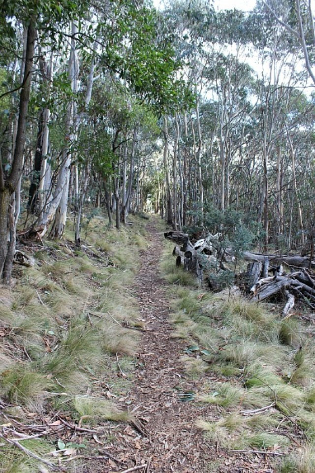 Eucalypt lined trail at Mount Canobolas near Orange NSW