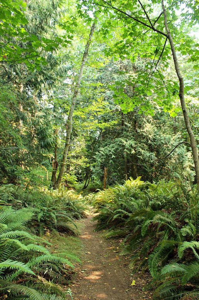 Forest trail on Hornby Island, Canada