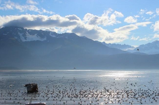 Sea birds in Kenai Fjords National Park in Alaska
