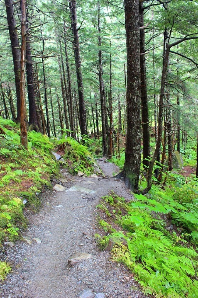Hiking Mt Roberts near Juneau in the rain