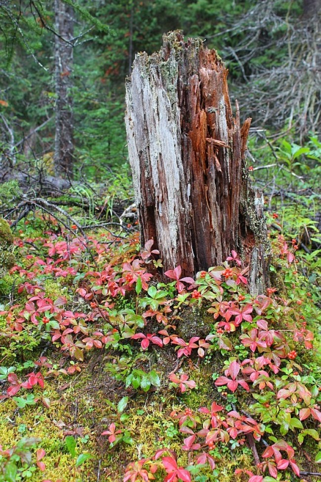 Fall colours coming in in Yoho National Park