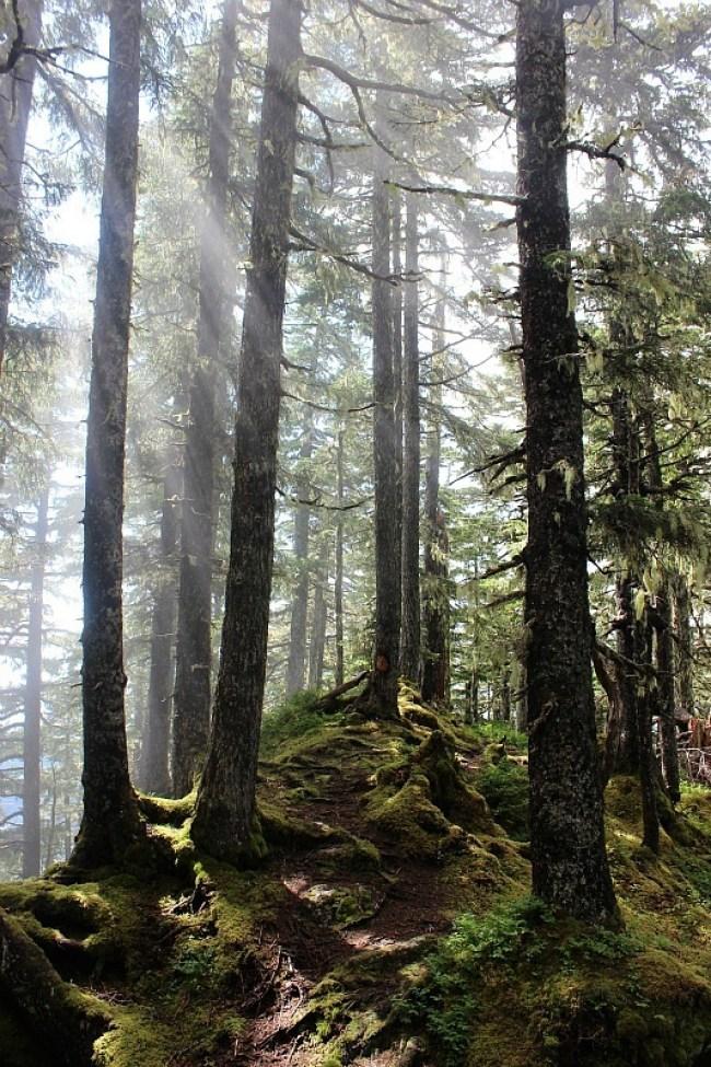 Misty forest on Mount Verstovia in Alaska