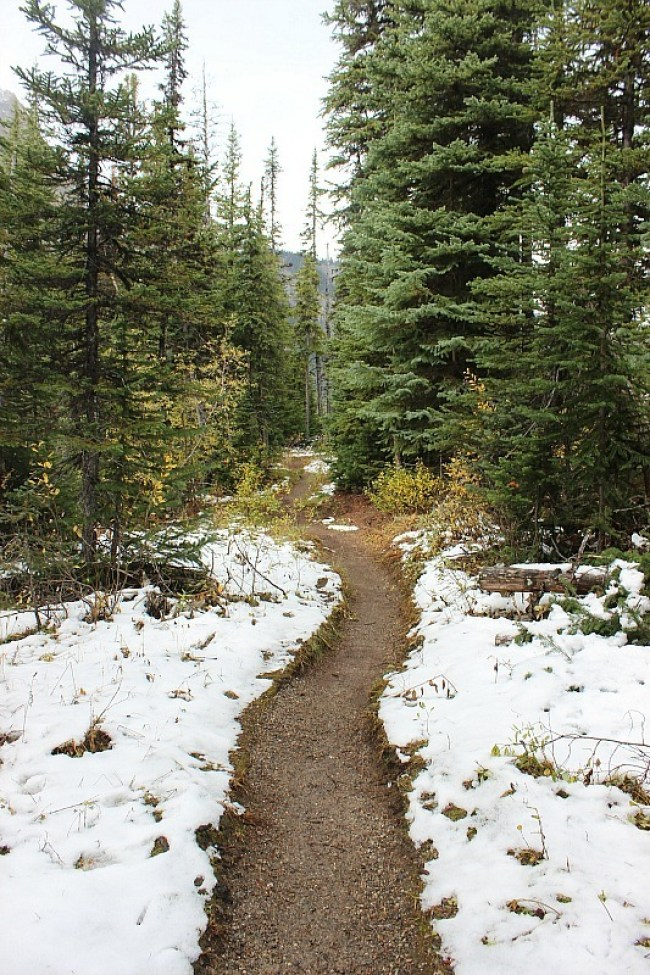 Snow on the trail to Sherbrooke Lake in Yoho National Park, BC