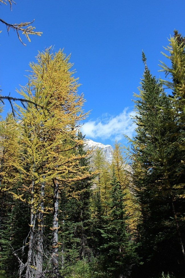 Autumn Larches in Larch Valley - my favorite Moraine Lake hike