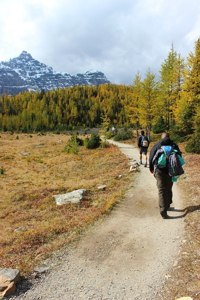 Hiking Larch Valley - a Moraine Lake hike in Banff National Park