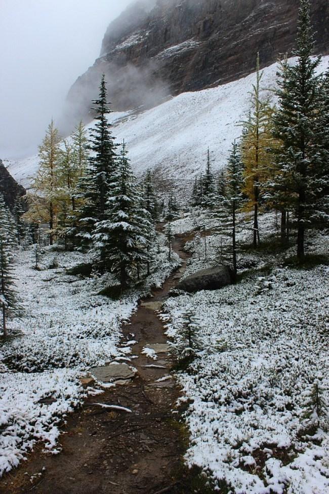 Rockies winter wonderland on the way to Abbot Pass Hut