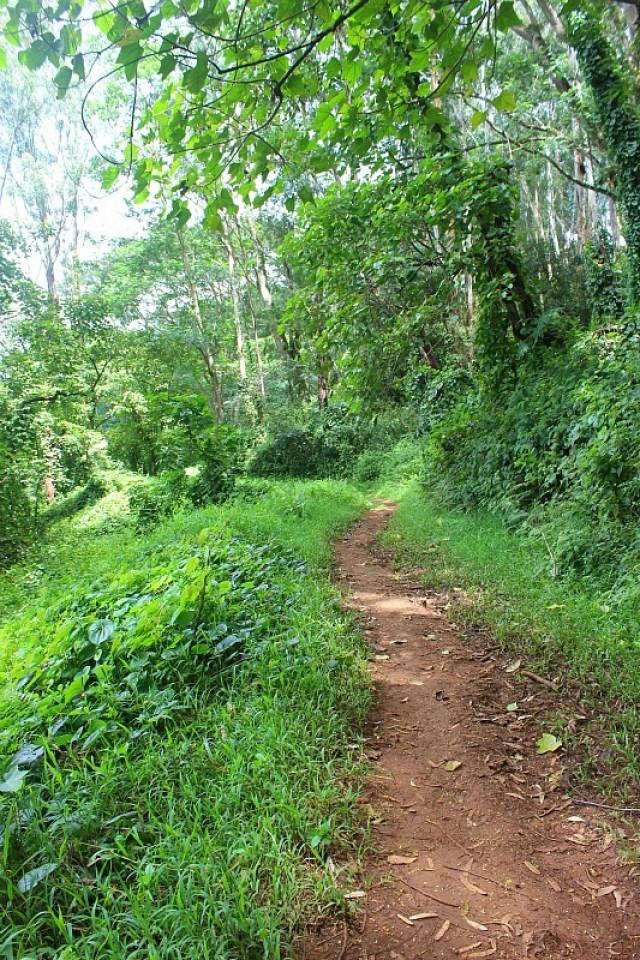 Kuilau Ridge Hike - Kauai Hiking Adventures