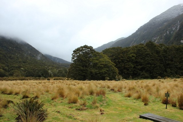 Foggy views outside Iris Burn hut on the Kepler Track