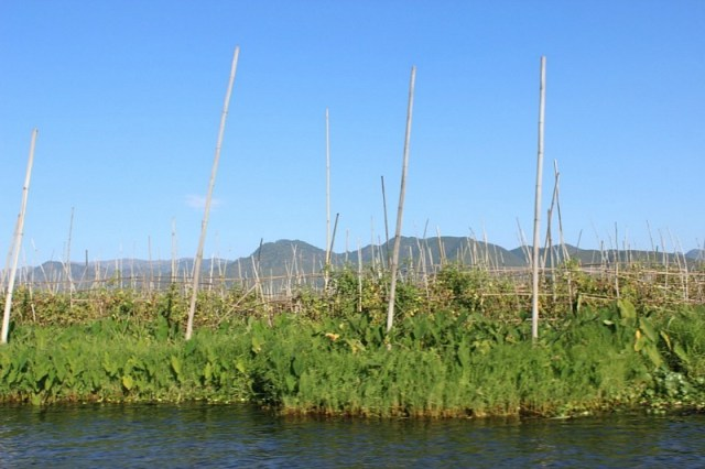 Inle Lake Floating Garden