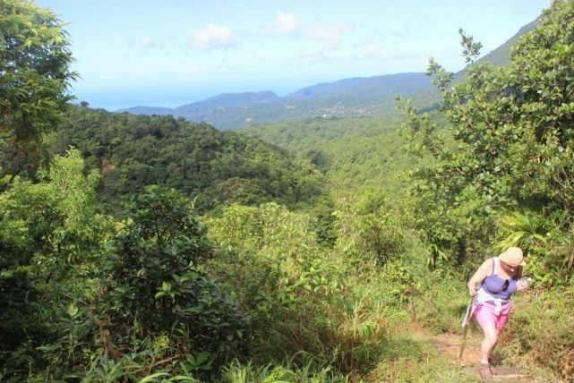 Hiking up Morne Nicholls on the way to the Boiling Lake in Dominica