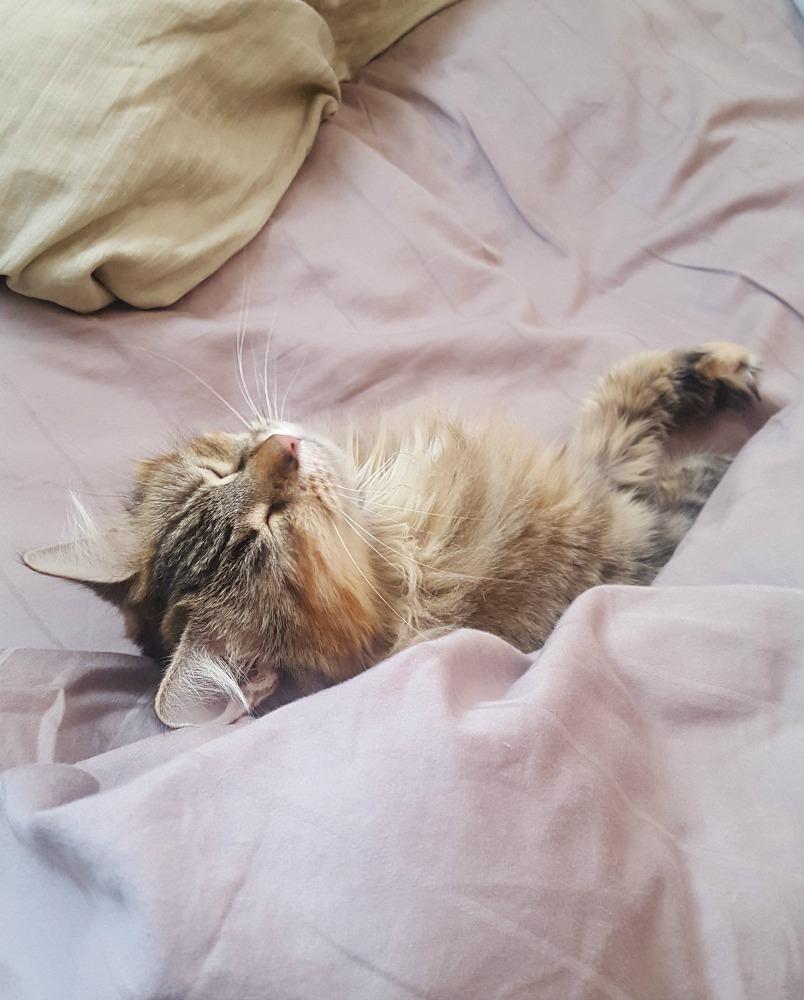 Petsitting a cute kitty is one of the perks of housesitting