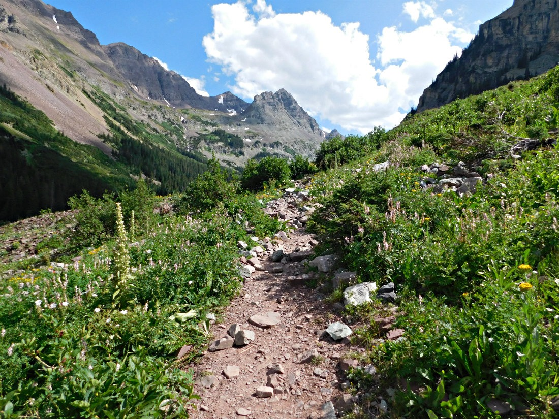 Wild flowers on the hike from Aspen to Crested Butte in Maroon Bells-Snowmass Wilderness