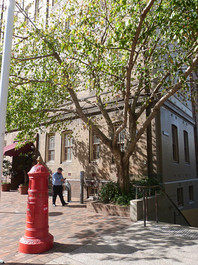 Visiting The Rocks is a great way to learn more about Sydney history