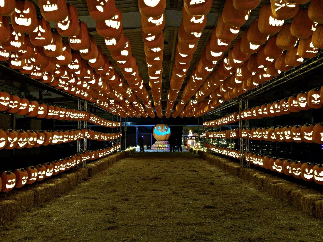 Working the Pumpkin Nights Festival in Denver