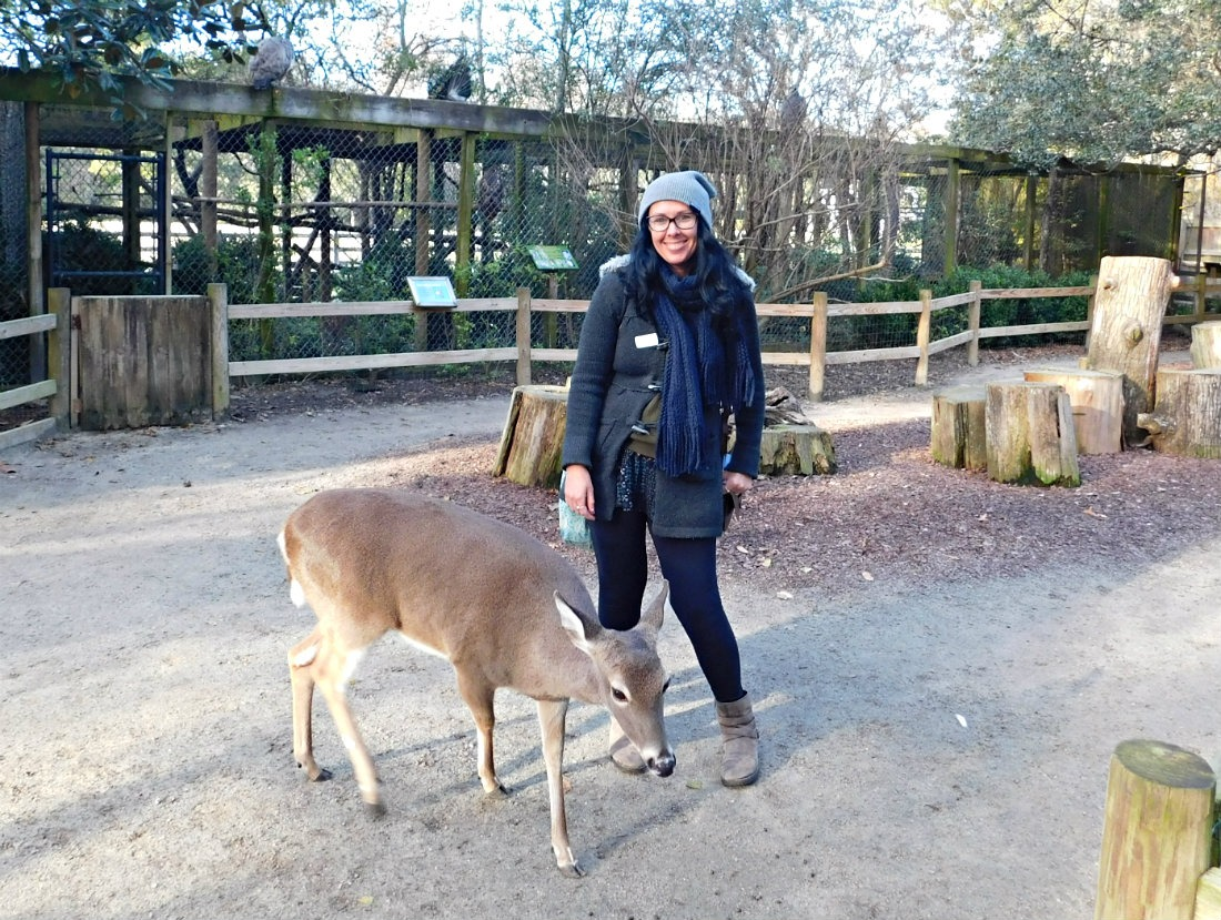 Petting a tame deer at Magnolia Plantation was one of highlights of month forty two of Digital Nomad Life