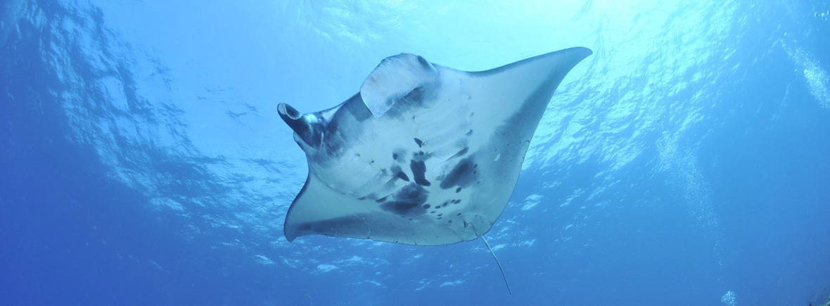 Best places to see manta rays, WildSide, World Wild Web