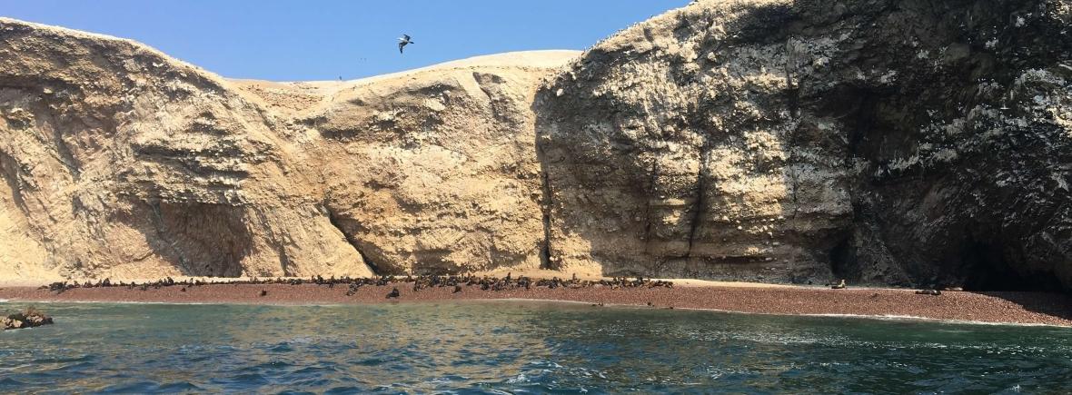 Wildlife in the Ballestas Islands, Chile, Peru