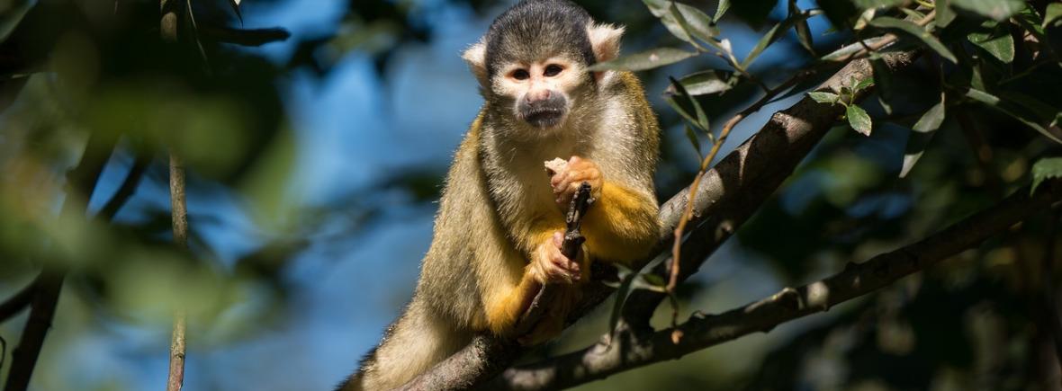 Best places to see squirrel monkeys, WildSide, World Wild Web