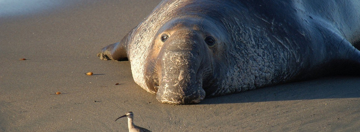 Best places to see elephant seals, WildSide, World Wild Web