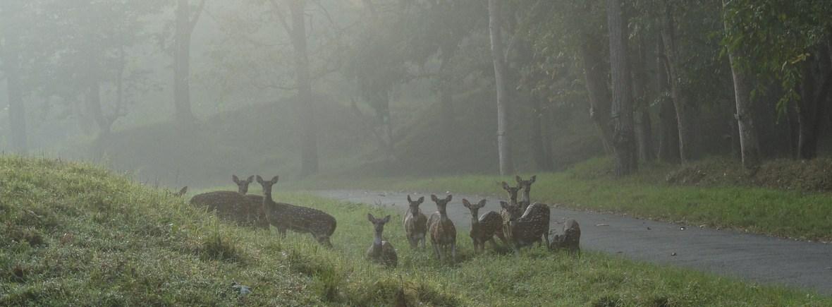 Wildlife in Parambikulam, WildSide, World Wild Web
