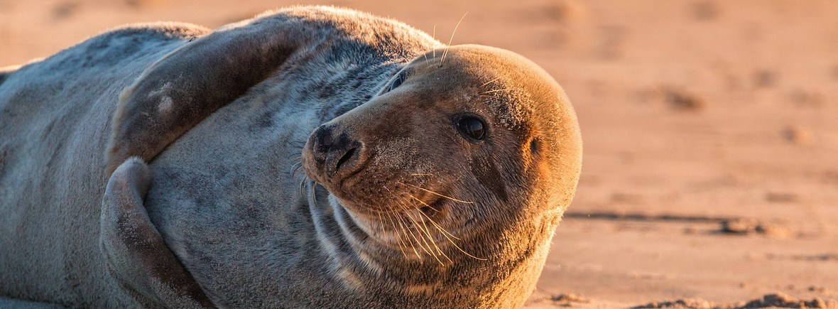 Wildlife in Moray Firth, WildSide, World Wild Web