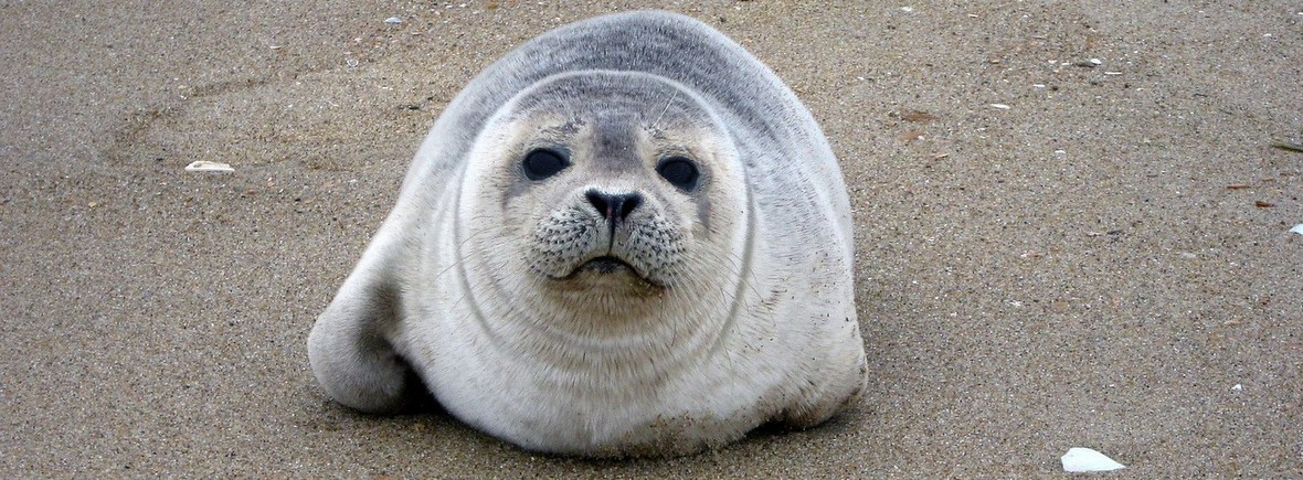 where to see harbour seals, WildSide, World Wild Web