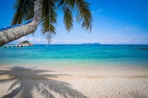 Pulau Tioman WildSide World Wild Web