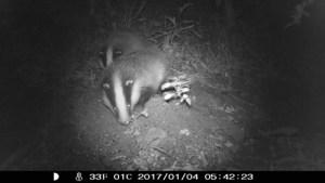 badger camera trap, wildside, world wild web
