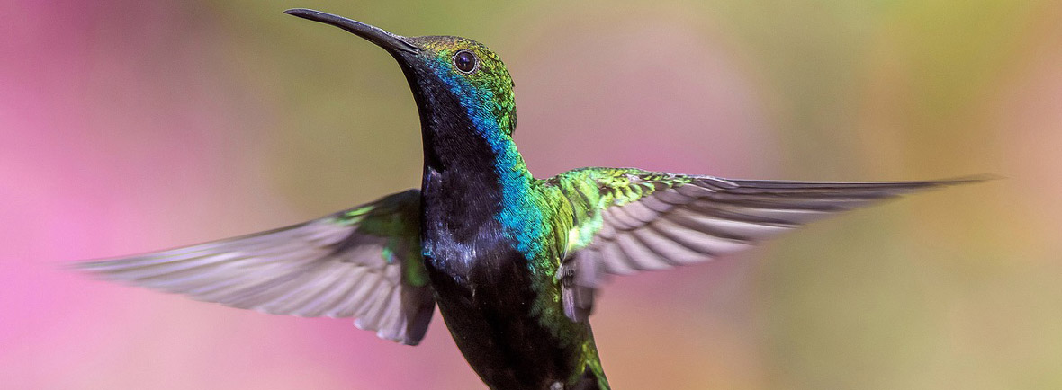 where to see hummingbirds, wildside, world wild web
