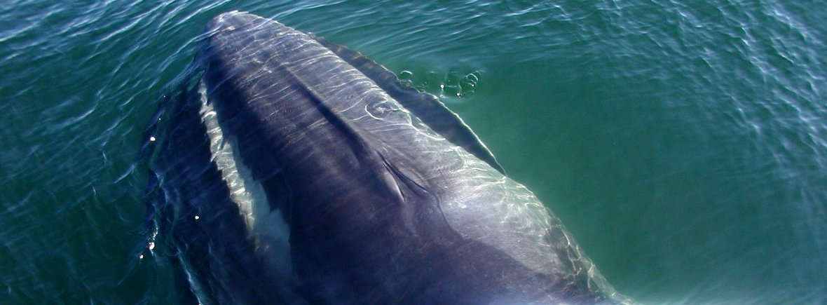 where to see fin whales, wildside, world wild web