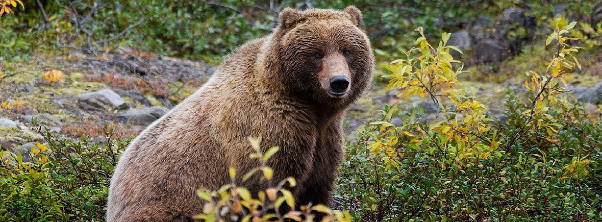 where to see grizzly bears, wildside, world wild web