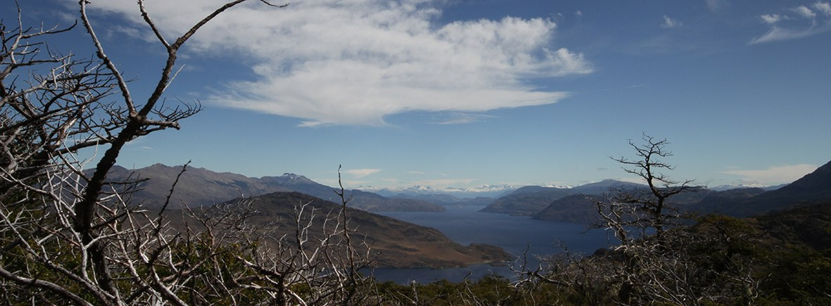 wildlife in patagonia national park, wildside, world wild web