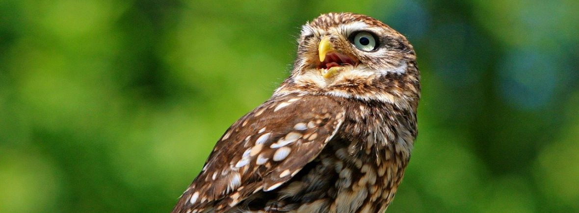 where to see little owls, wildside, world wild web