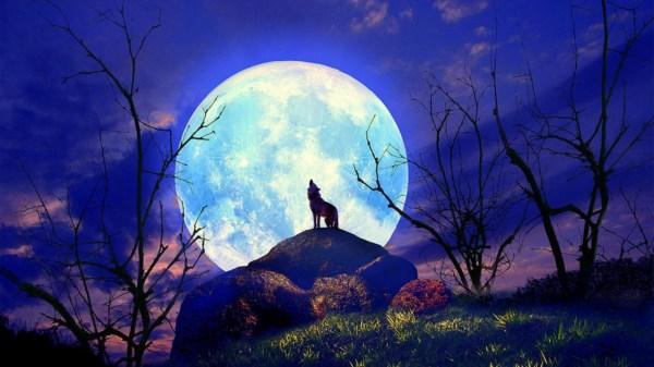 Beautiful Wolf Moon Wallpaper