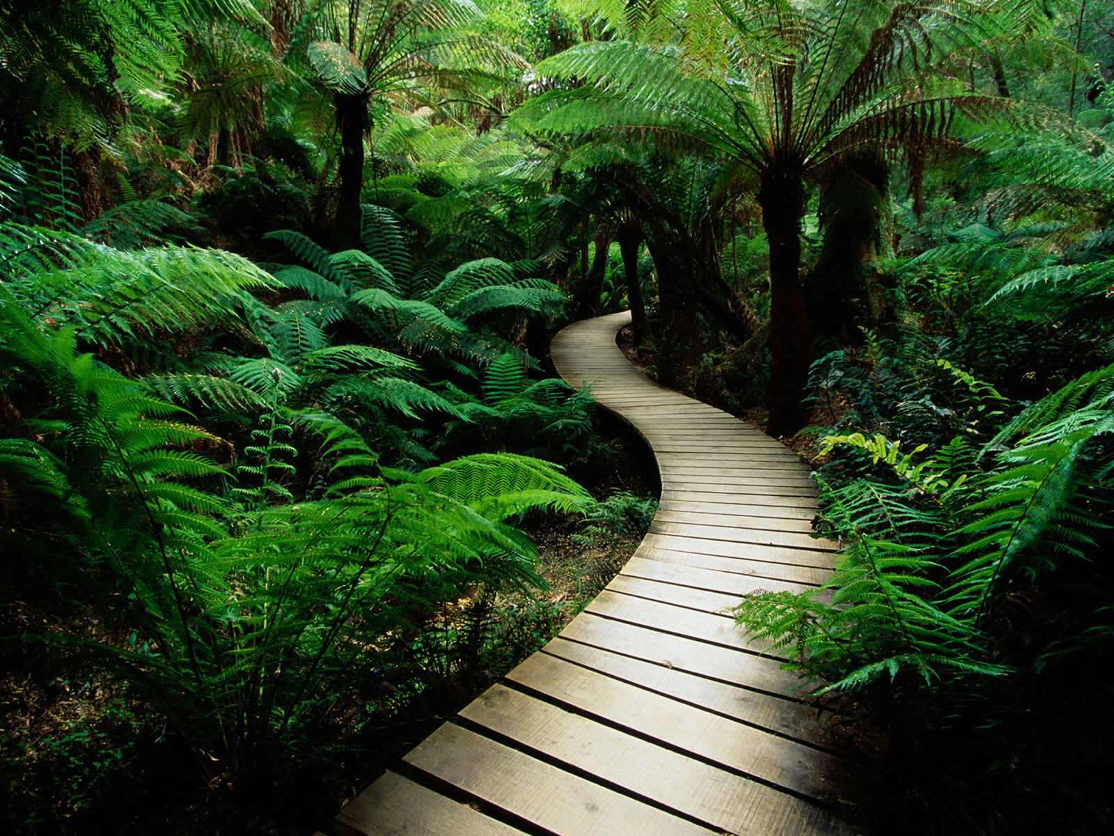Beautiful Nature Images Free To Download  The WoW Style