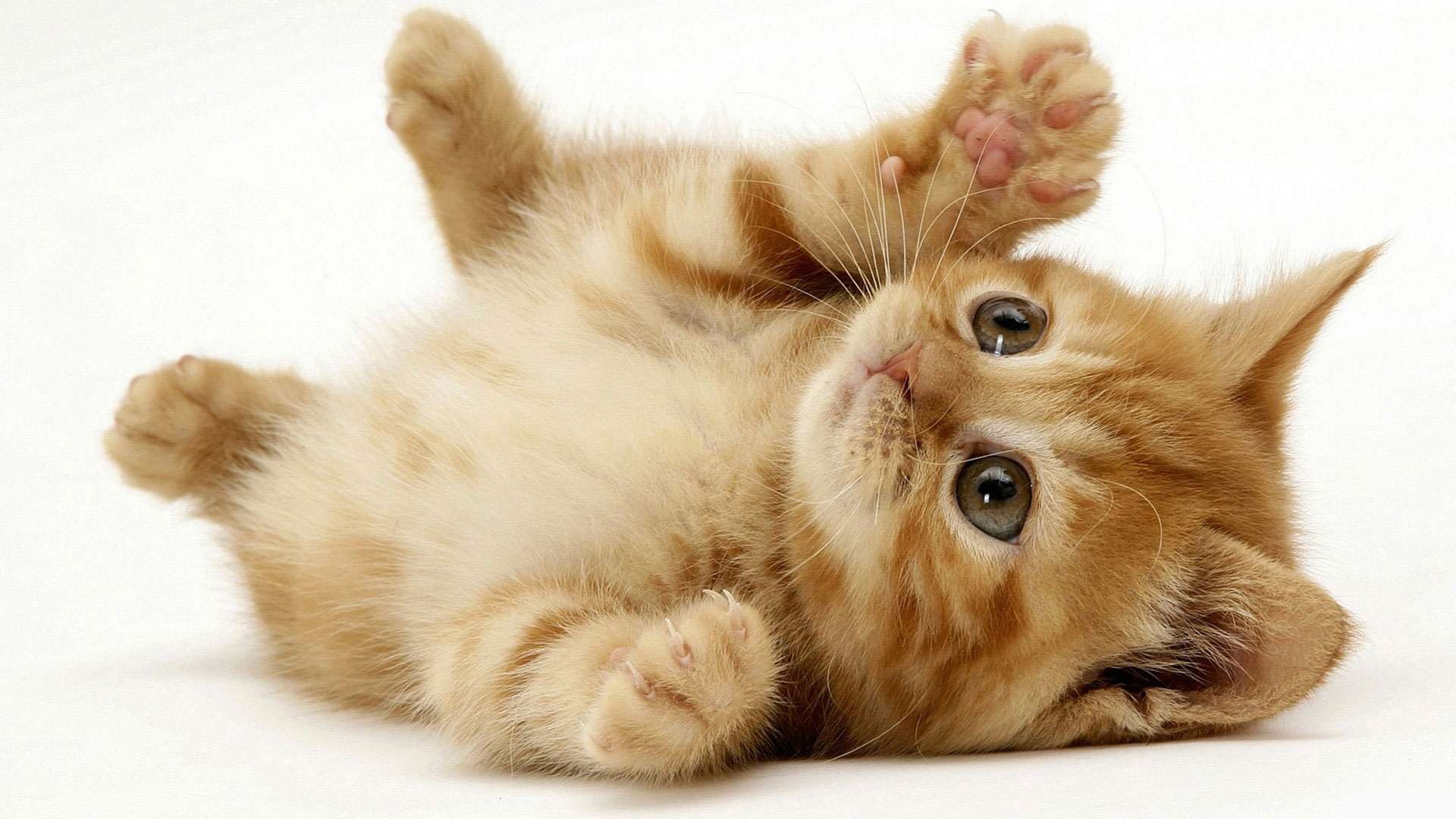 Beautiful Cats Pictures and Wallpapers
