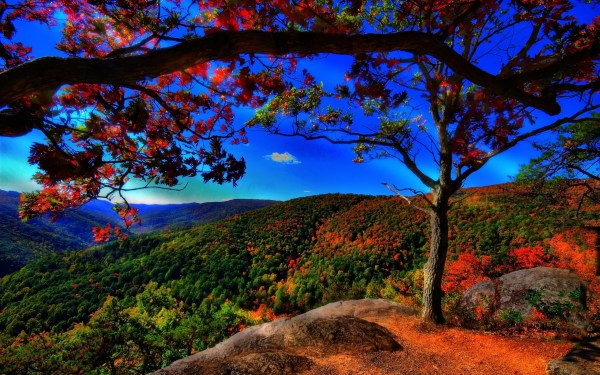 Beautiful Fall Nature Photography