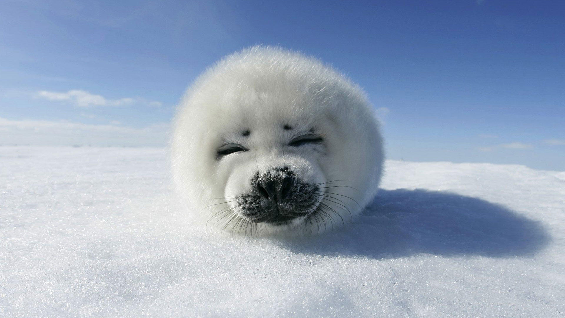 Cute Animal Pictures And Wallpapers The Wow Style