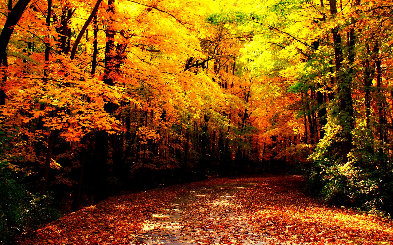 Fall Leaves Wallpaper Windows 7 Beautiful Autumn Wallpapers The Wow Style
