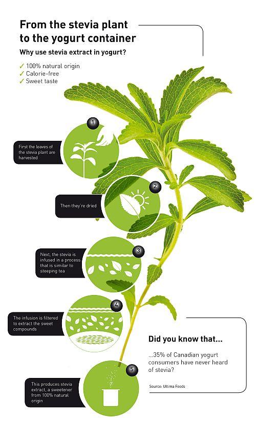 stevia_infographic_HR