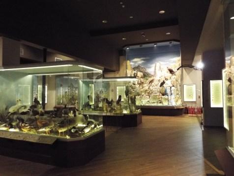 Meteora Natural History & Mushroom Museum