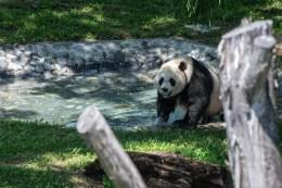 National Zoo Take Two - 4