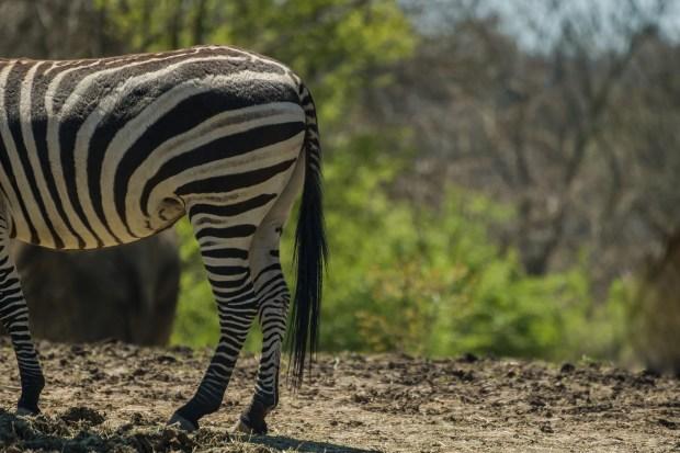 Pittsburgh Zoo Walkthrough - 11