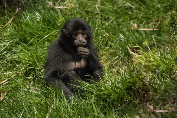 Pittsburgh Zoo Walkthrough - 15