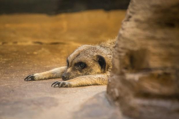 Pittsburgh Zoo Walkthrough - 21