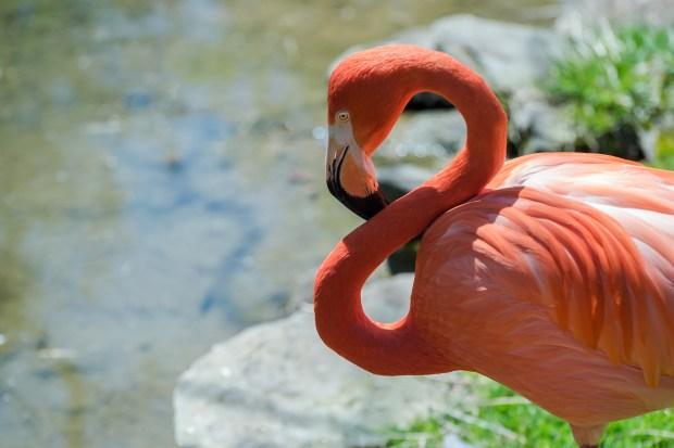 Pittsburgh Zoo Walkthrough - 4