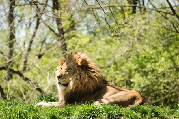 Pittsburgh Zoo Walkthrough - 5