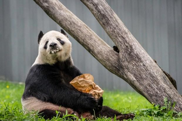 National Zoo w Steve -17