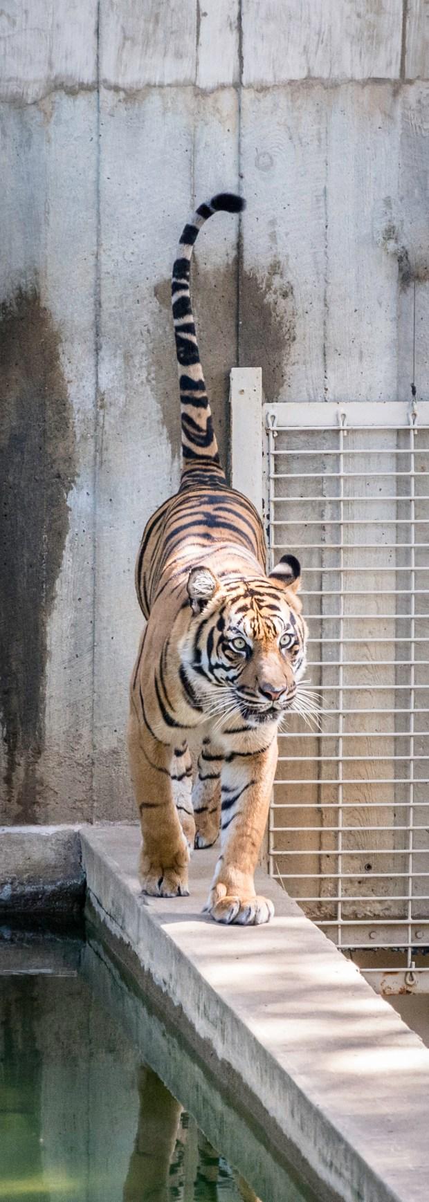 National Zoo w Steve -43