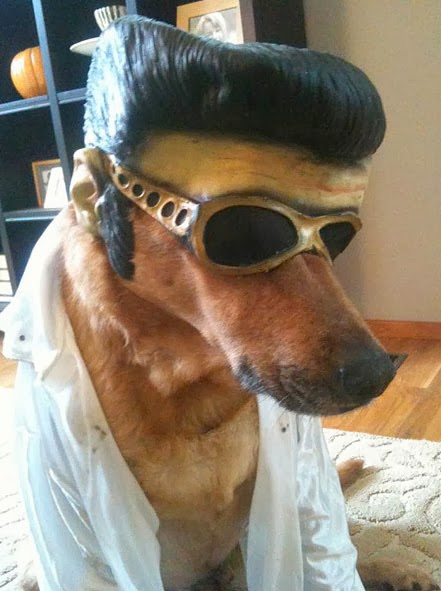 Hallowen Elvis Dog